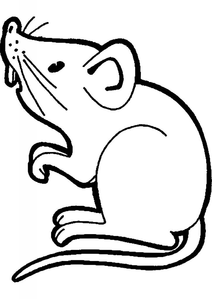 Magazoo Rat vivant