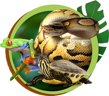 Service pour reptiles