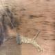 J. Topolski Tiger Necklace - Brass