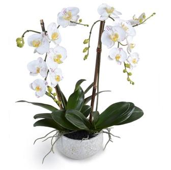 """Phalaenopsis Orchid White Glaze - 26"""""""