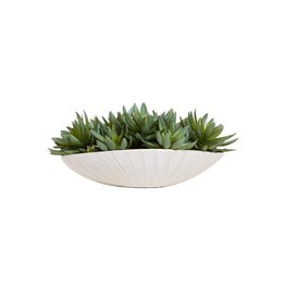 Succulent in White Oval Pot
