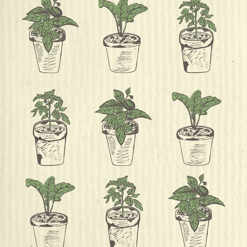 WetIt! Swedish Treasures Swedish Wet Cloth Potted Seedlings