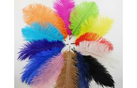 SA Feathers