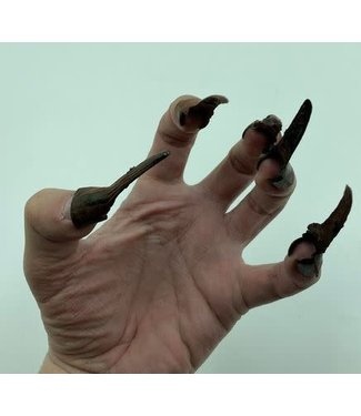 Rubies Costume Company Black  Clip On Vampire  Fingernails with Removable Blood Coating