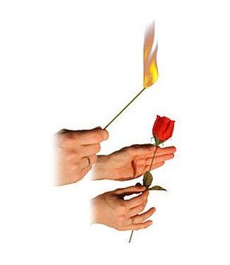 Torch to Rose M9/1004