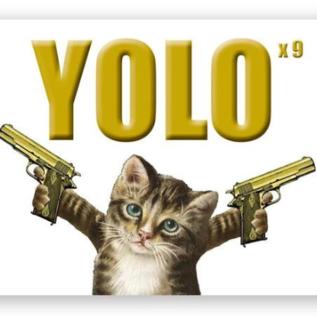 Mincing Mockingbird Greeting Card - YOLO Kitty
