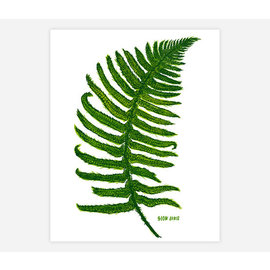 Buy Olympia Slow Loris Sword Fern Print