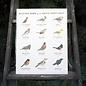 Yardia Backyard Birds of the Pacific Northwest Art Print