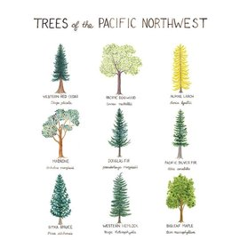 Yardia Trees of the Pacific Northwest Art Print