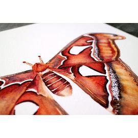 Jennifer Dean Art Atlas Moth Print