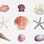 Jennifer Dean Art Seashell Collection Print