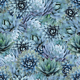 HF - Natures Narratives - R4677-653-Agave