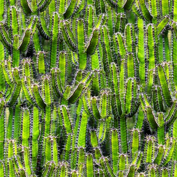 HF - Natures Narratives - R4676-71-Lime