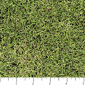 Northcott - Naturescapes - 21407-74 - Grass
