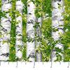 Northcott - Naturescapes - 21844-74 - Aspens