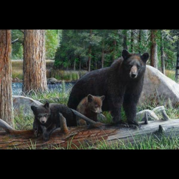Northcott - Black Bear Panel / DP21937-36