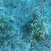 Robert Kaufman - Batik / Aqua Spa 3 / Terrain / 18652-246 Water