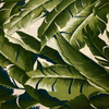 Hoffman - Barkcloth - Tropical Large Leaves / Forest / Q5006-44