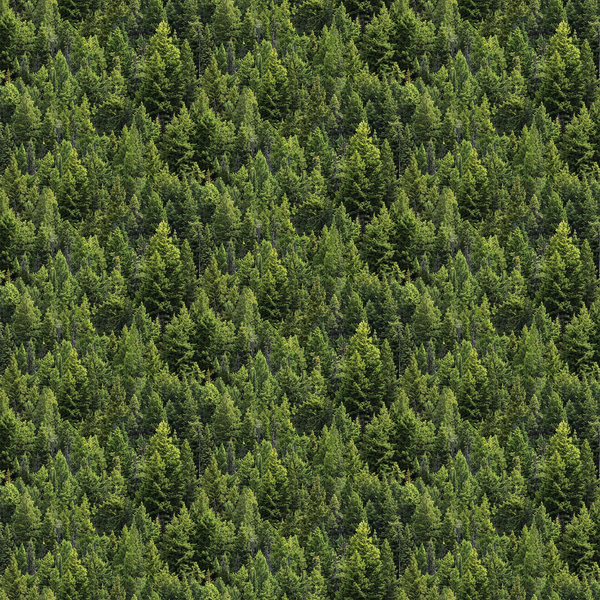 Northcott - Naturescapes / Digital Prints / Pine Trees - DP23703-76
