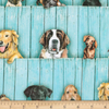 RK - Whiskers & Tails / Dogs on Fence / 19023-287 Sweet