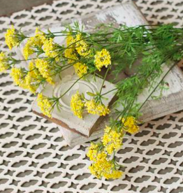 Dill Bush - Yellow 23""