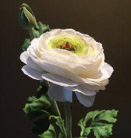 Ranunculus Stem - White - 27""