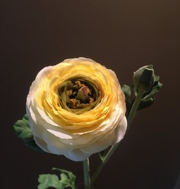 Ranunculus Stem - Yellow - 27""