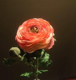 """Ranunculus Stem - Tangerine - 27"""""""