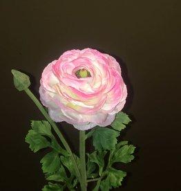 "Ranunculus Stem - Pink - 27"""