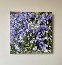 "SStraub Paris Campanule - European Splendor Original Photo - 12"" x 12"""