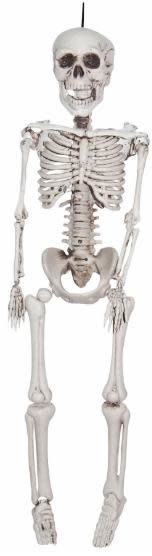 "12"" Medium Plastic Realistic Skeleton"