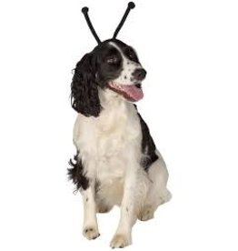 Dog Costume Antennas Black M/L