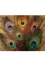 Nature's Spirit Peacock Eye Sticks