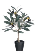 Potted Olive Tree 14""