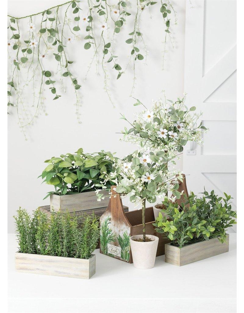 Daisy & Eucalyptus Topiary