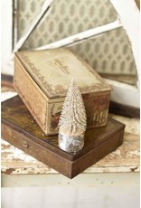 "6"" Snowy Foxtail Pine Tree"