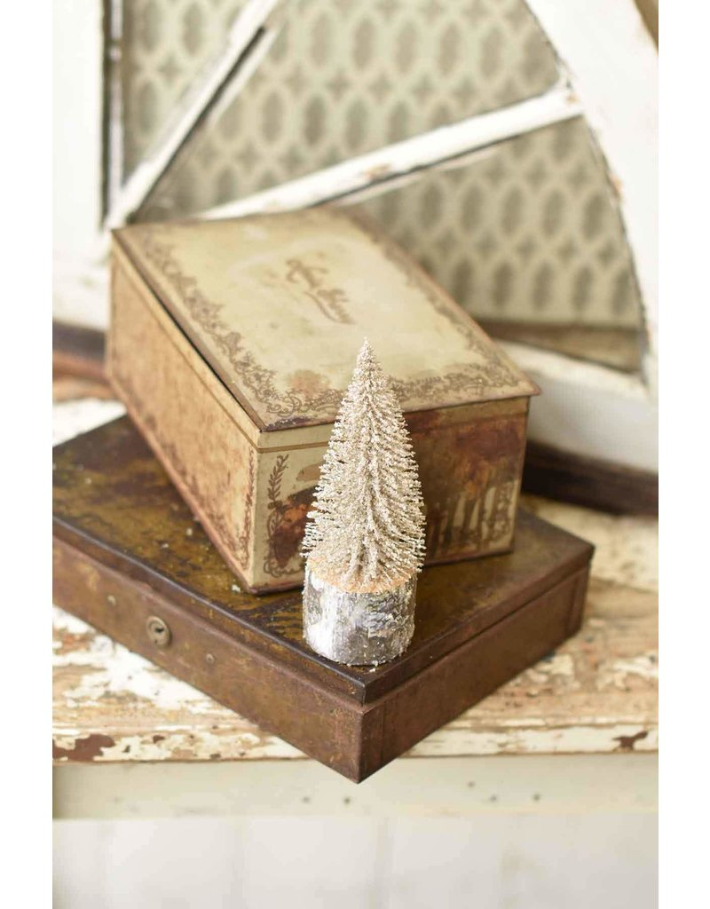 "8"" Snowy Foxtail Pine Tree"