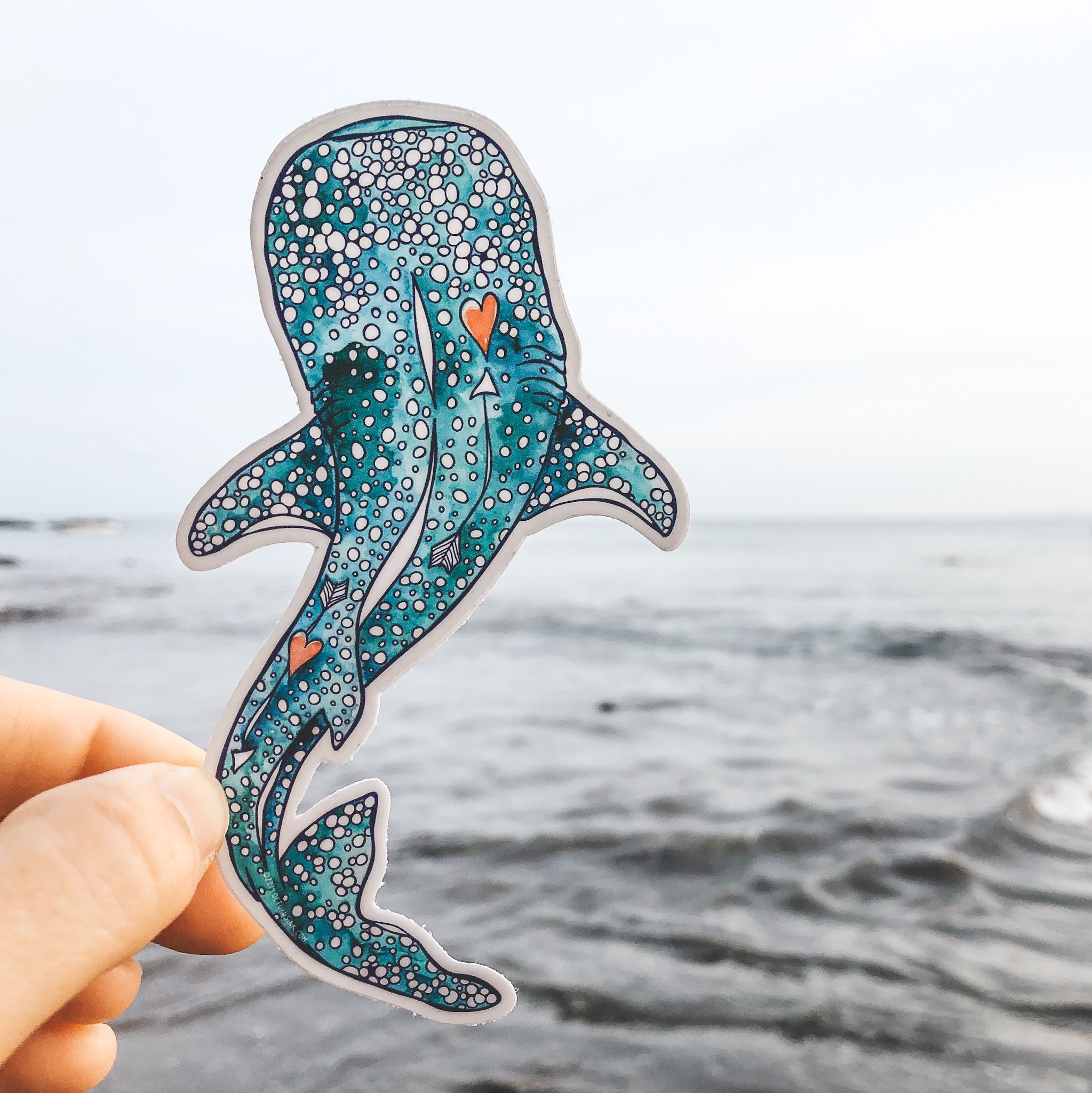 Whale Shark- Decal