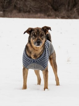 Image of Bird Island Dog Sweater
