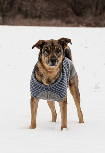 Wool & Co. Feature Pattern of the Week  - Bird Island Dog Sweater