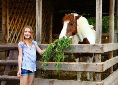 FARM ANIMALS & PETS