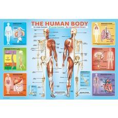 EUROGRAPHICS HUMAN BODY 200 PIECE