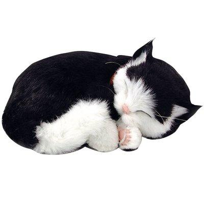 PERFECT PETS PERFECT PETS KITTEN