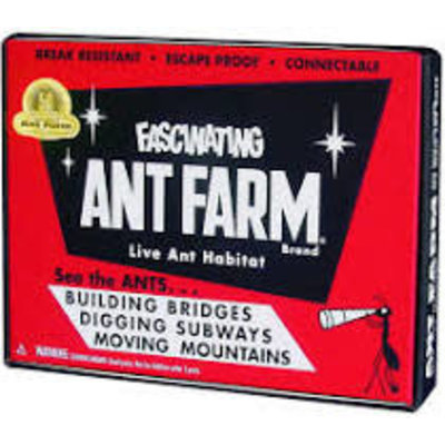 SCHYLLING ASSOCIATES ANT FARM