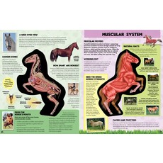 BECKER & MAYER KIDS INSIDE OUT HORSE: THE INSIDE STORY ON THE ANIMALS THAT'S BORN TO RUN!