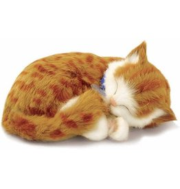 88 UNLIMITED PERFECT PETS ORANGE TABBY