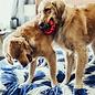 KONG Chew Ring Dog Toy Small/Medium