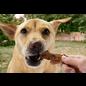 "EARTH ANIMAL Earth Animal Chicken Tenders ""SHINE Herbed Chicken"" 4oz"