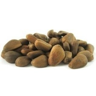 Raw Pine Nuts in the Shell Bulk 1# bag