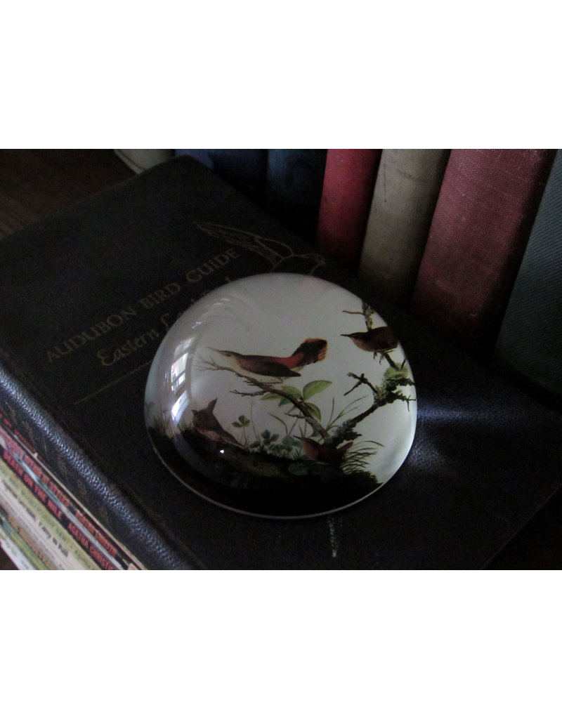 Parastone Audubon Winter Wrens Paperweight